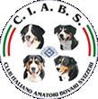 ciabs Bovaro Bernese